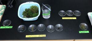 Biology lab materials